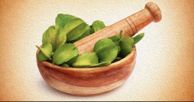 Arjuna (Terminalia Arjuna) Herb - Health Benefits :: Chopra Ayurveda Surrey