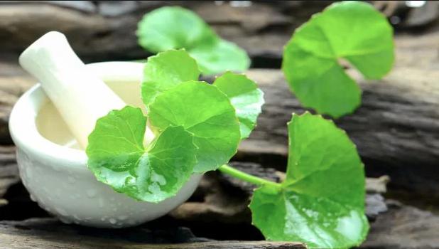 Brahmi - Health Care with Herbal Medicine - Chopra Ayurveda Surrey