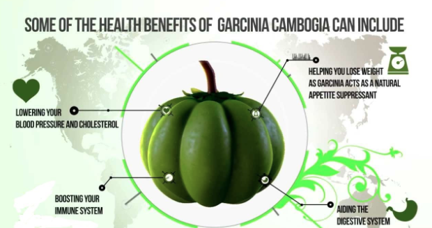 Garcinia - Health Benefits with Ayurvedic Way :: Chopra Ayurveda Surrey