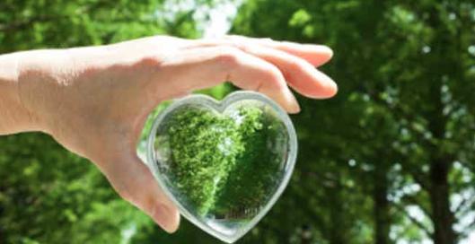 Heart Diseases Treatment in Ayurveda - Basic Knowledge :: Chopra Ayurveda Surrey